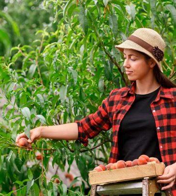 Formação Poda de Árvores de Fruto
