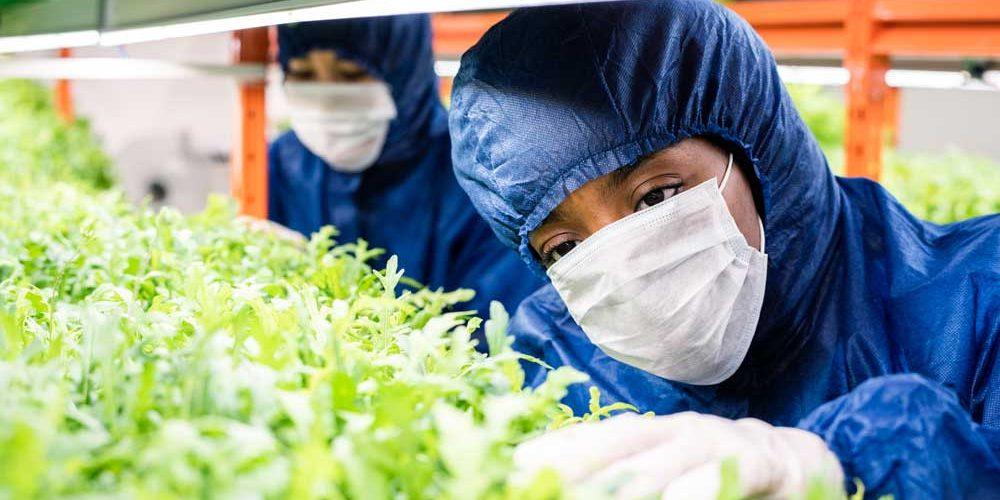 Proteção fitossanitária e aplicação de produtos fitofarmacêuticos
