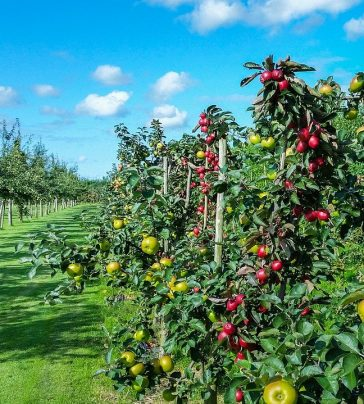 Cultura de pomares em modo de produção biológico